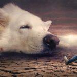 Maksud Mimpi Anjing