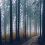 Maksud Mimpi Pokok
