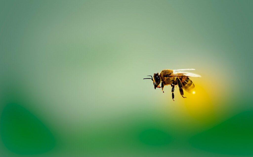 Maksud Mimpi Lebah