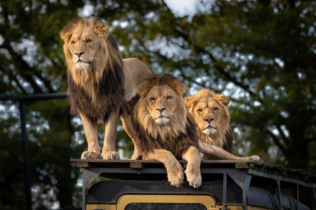 Maksud Mimpi Singa