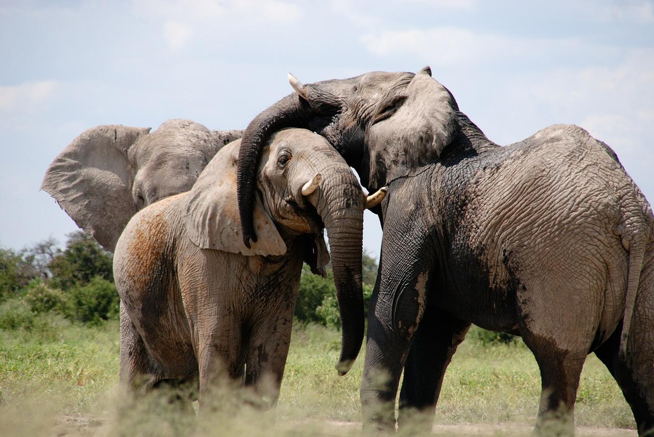 Maksud Mimpi Gajah